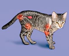 лакомство Sanabelle для суставов старых и больших кошек