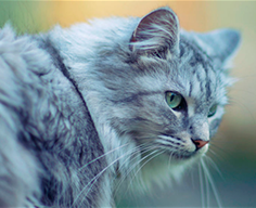 лакомство Sanabelle для здоровья кожи и шерсти кошек