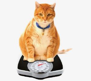 ожирение котов от сухого корма