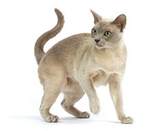 сухой корм Sanabelle для кастрированных и стерилизованных котов и кошек