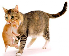 сухой корм Sanabelle для кормящих и беременных кошек