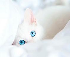 сухой корм Sanabelle для кошек в чувствительным пищеварением