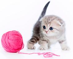 сухой корм Sanabelle для котят киттен kitten
