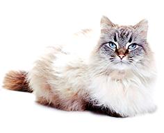 сухой корм Sanabelle для пожилых котов и кошек adult+
