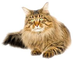 сухой корм Sanabelle для взрослых котов и кошек adult