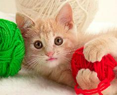 витаминное лакомство Sanabelle для котов за хорошее поведение